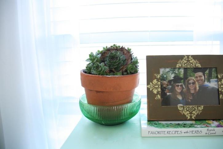 Succulent on blue dresser.