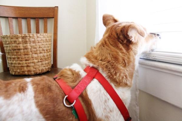 Cute Doggie | redleafstyle.com