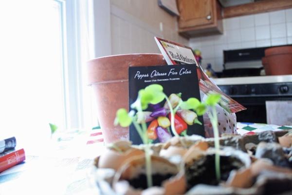 Kitchen Plants | redleafstyle.com