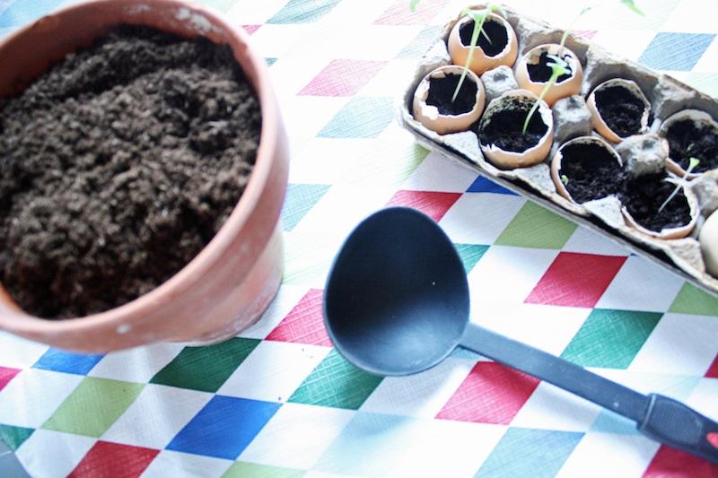 Indoor Gardening | redleafstyle.com