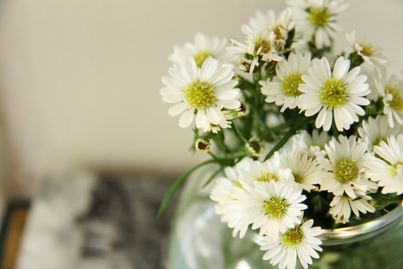 Small Daisies | redleafstyle.com