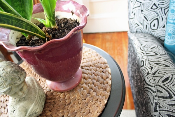 5 Best Houseplants For Your Home | redleafstyle.com